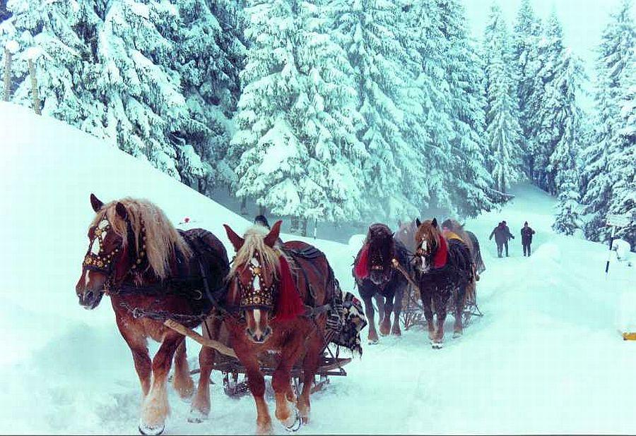 Come Si Dice Buon Natale In Rumeno.Un Natale Stupefacente In Romania Blog Cu Doua Fet Z E