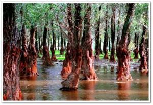 delta foresta