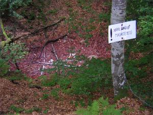 cimitero uccelli