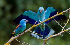 uccelli delta