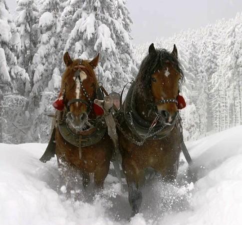 slitta-cavalli